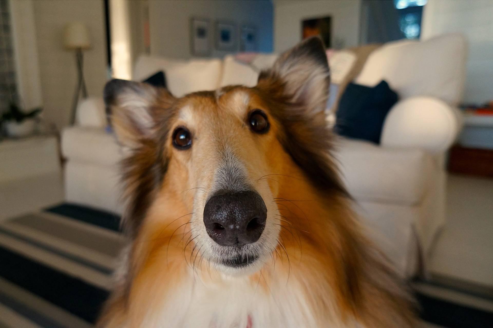 Solve Problem Dog Behavior